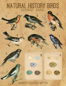 bird_color_graphicsfairy