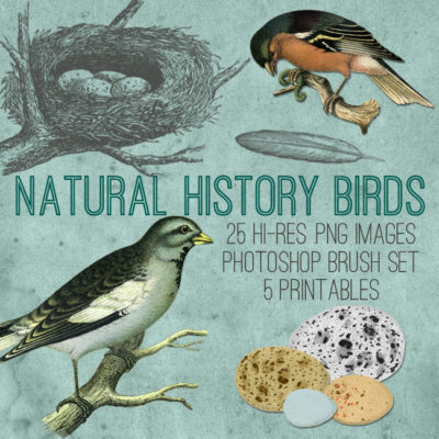 natural_history_birds_front_graphicsfairy