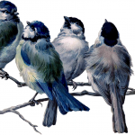 01_spring_birds_branch_graphicsfairy