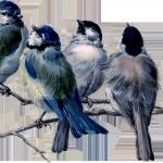 01_spring_birds_branch_graphicsfairy