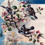 04_spring_four_birds_graphicsfairy
