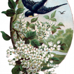 06_spring_swallow_graphicsfairy