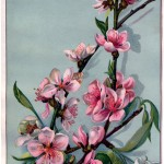 13_spring_pink_branches_full_graphicsfairy