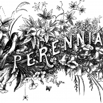 18_bw_typography_perennials_graphicsfairy