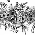 20_bw_typography_bulbs_plants_graphicsfairy