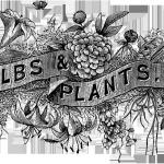 20_bw_typography_bulbs_plants_graphicsfairy