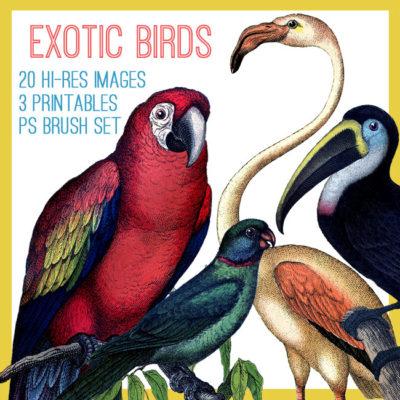 parrots_650x650_graphicsfai