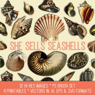 shells_650x650_graphicsfairy