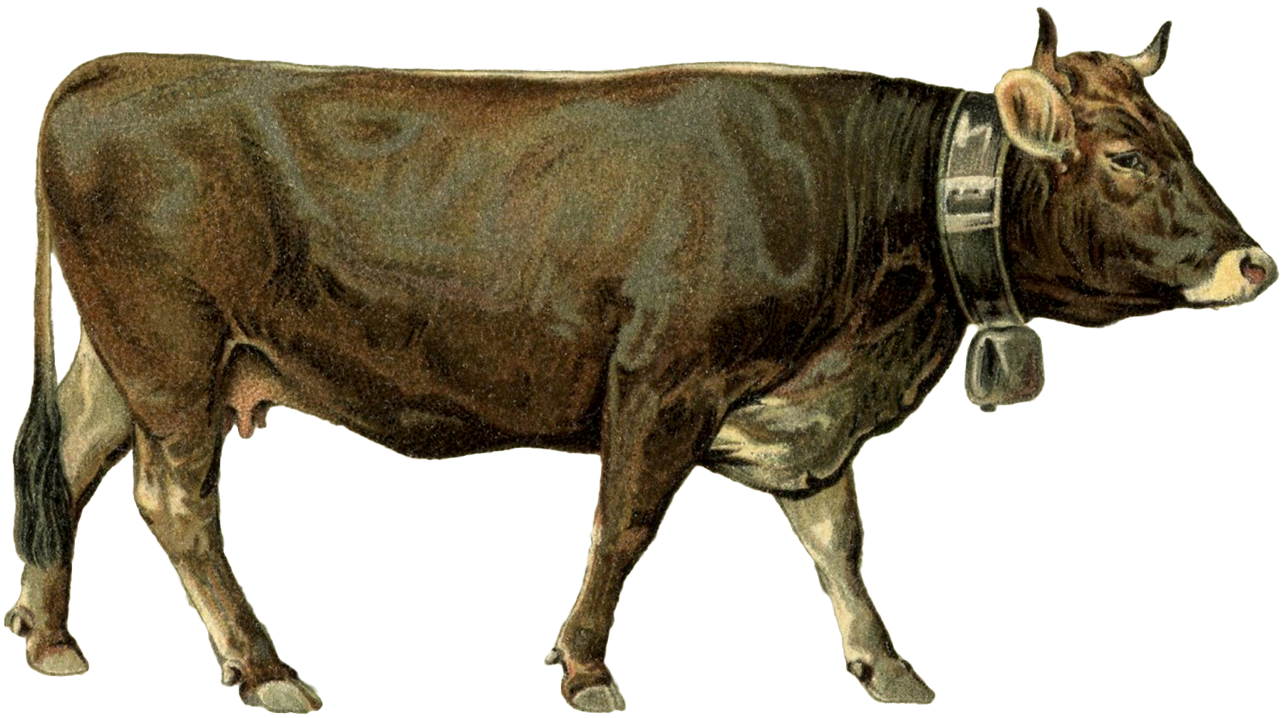 cows and dairy bundle