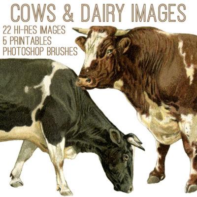 dairy_650x650_graphicsfairy
