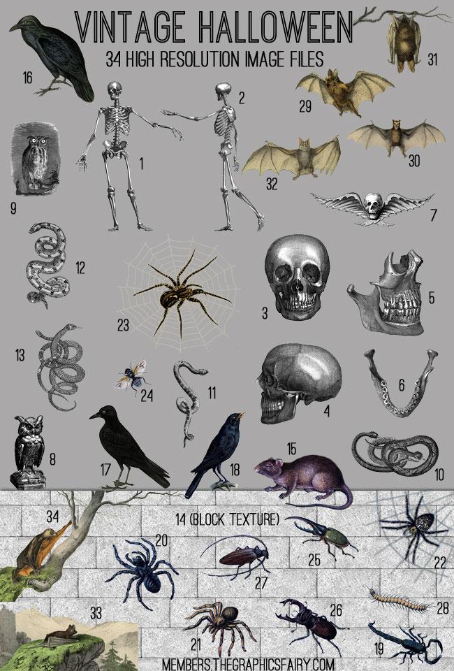 halloween_image_list_graphicsfairy