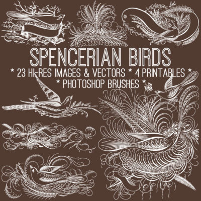 spencerian_650x650_graphicsfairy