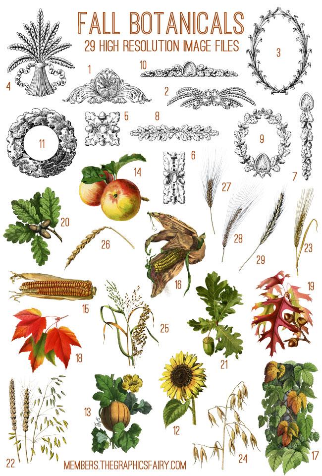 fall_botanicals_image_list_graphicsfairy