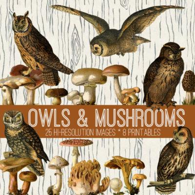owls_650x650