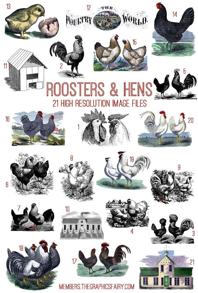 poultry_image_list_graphicsfairy
