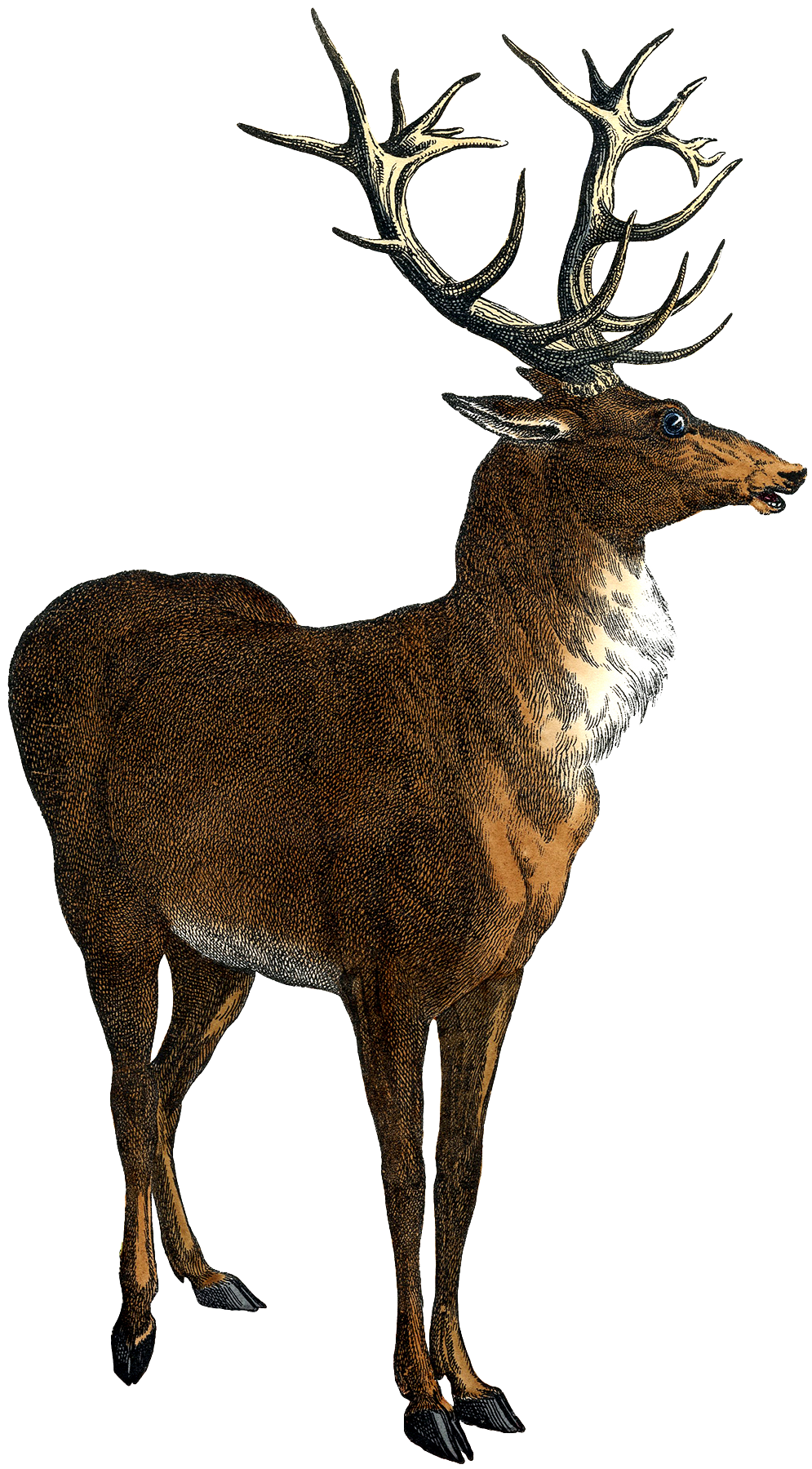 The Graphics Fairy: Oh Deer
