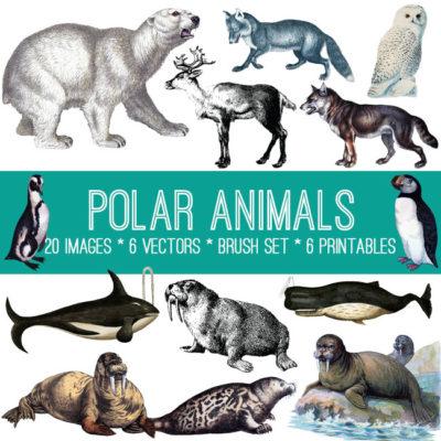 polar_animals_650x650