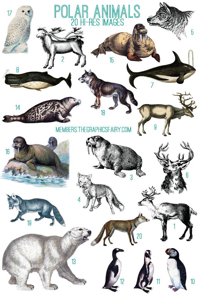arctic ocean animals list