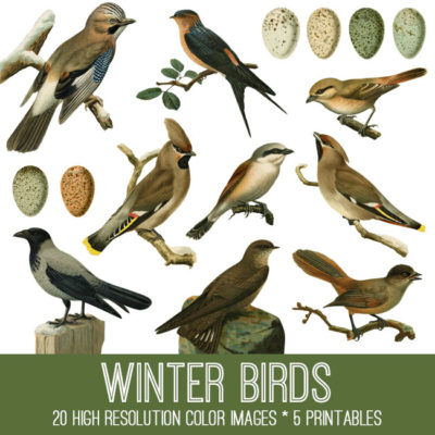winter_birds_650x650