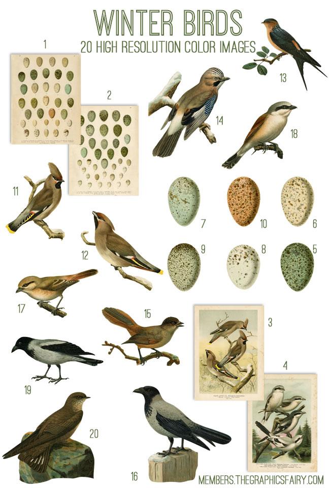 winter_birds_image_list_graphicsfairy