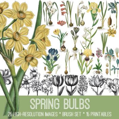 spring_bulbs_650x650