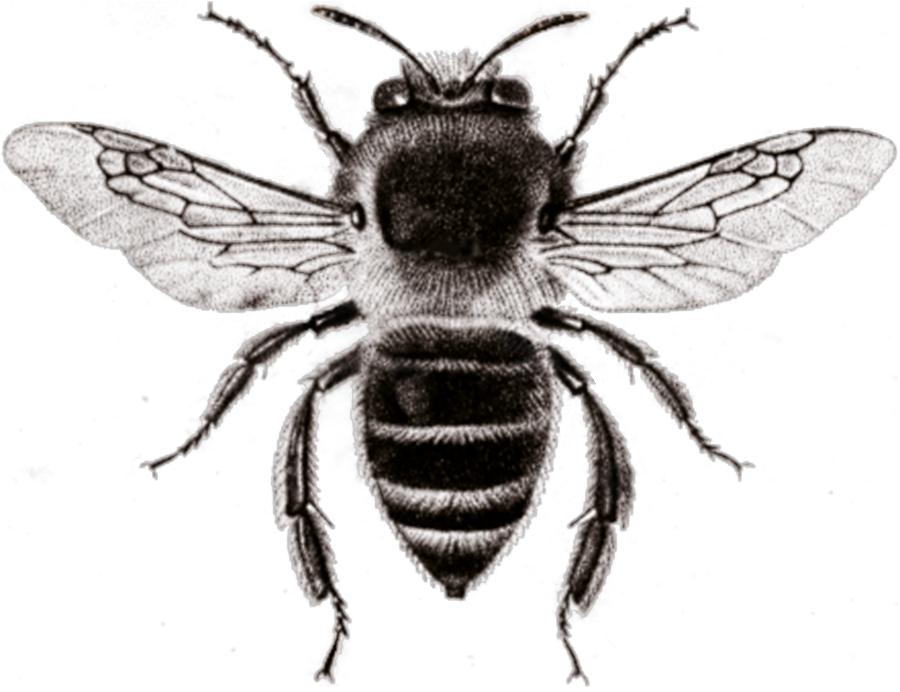 roses  u0026 bees
