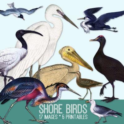 shore_birds_650x650