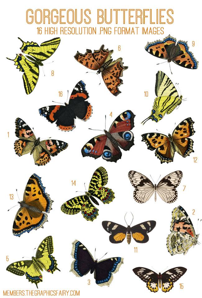 butterflies_image_list_graphicsfairy
