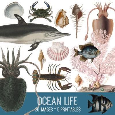 ocean_life_650x650_graphicsfairy
