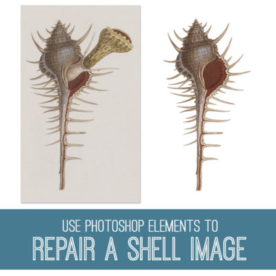 tutorial-650x650_fix_shell_graphicsfairy