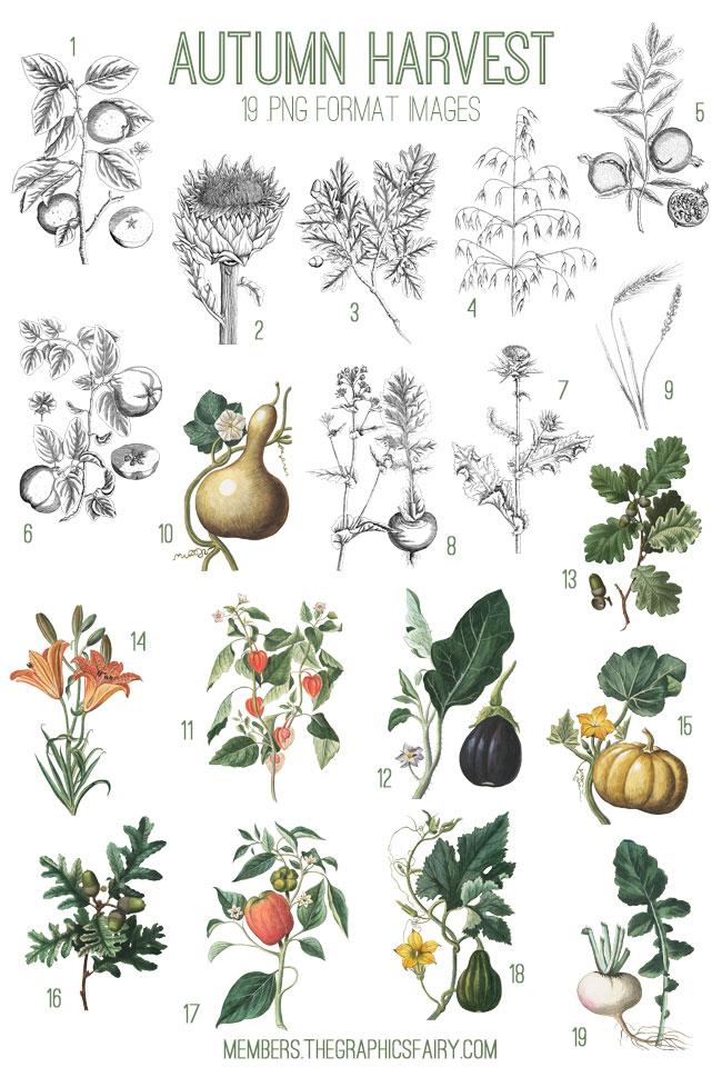 fall_harvest_image_list_graphicsfairy
