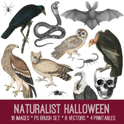 naturalist_halloween_graphicsfairy_650x650