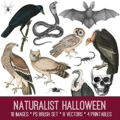 naturalist_halloween_graphicsfairy_650x650