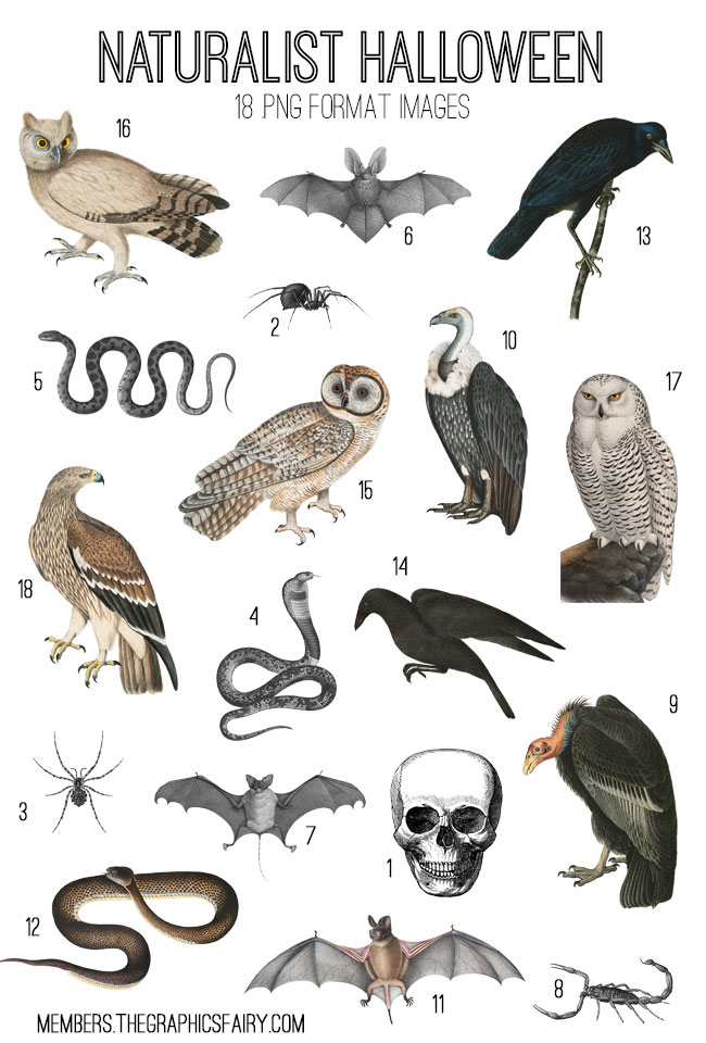 naturalist_halloween_image_list_graphicsfairy