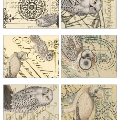 thumbnail of owl_tags_graphicsfairy