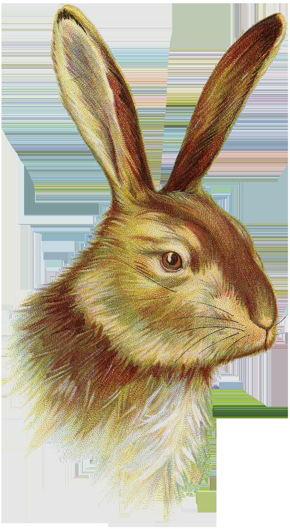 bunnies  u0026 peeps