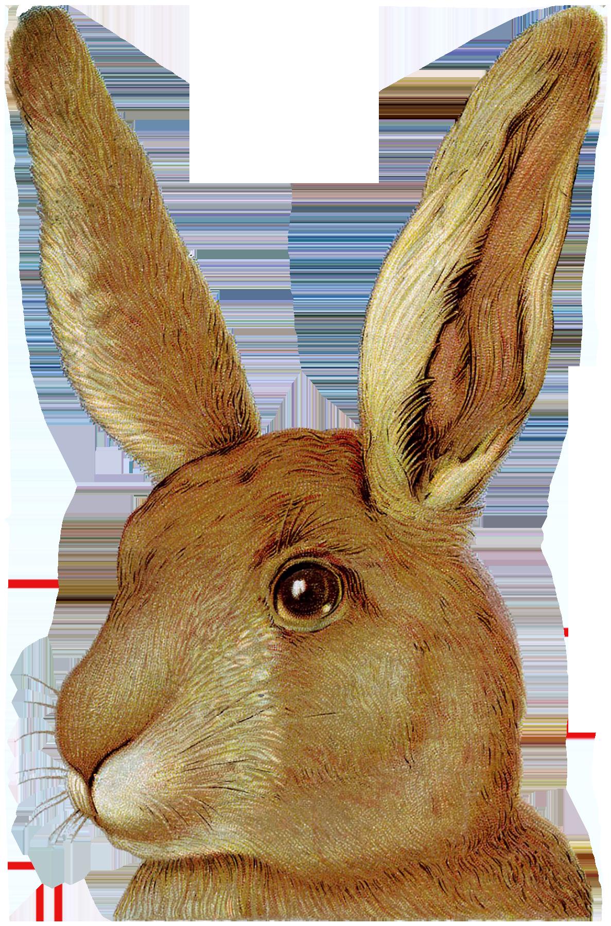 Bunnies & Peeps