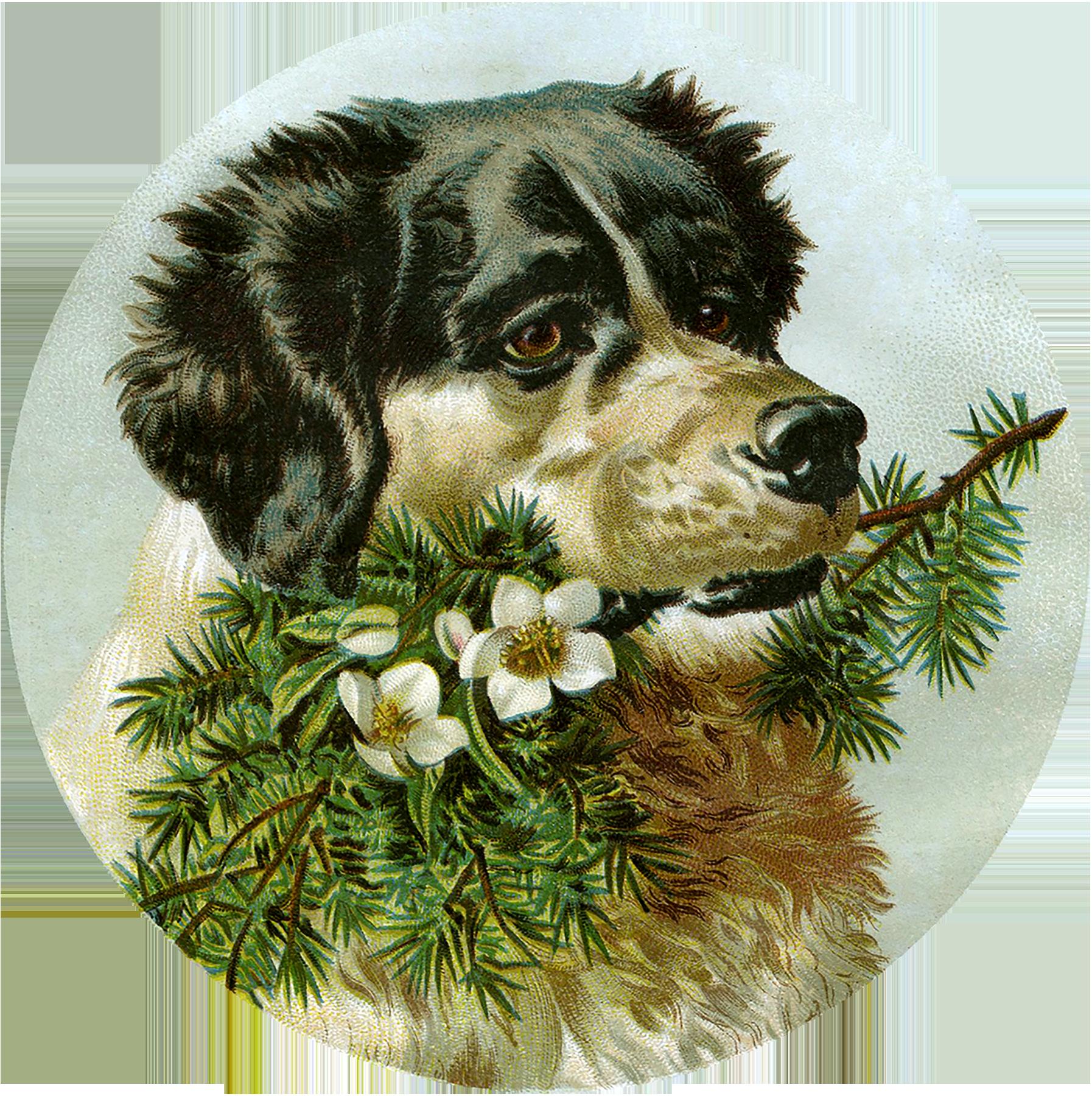 Открытки, открытки с изображением собак